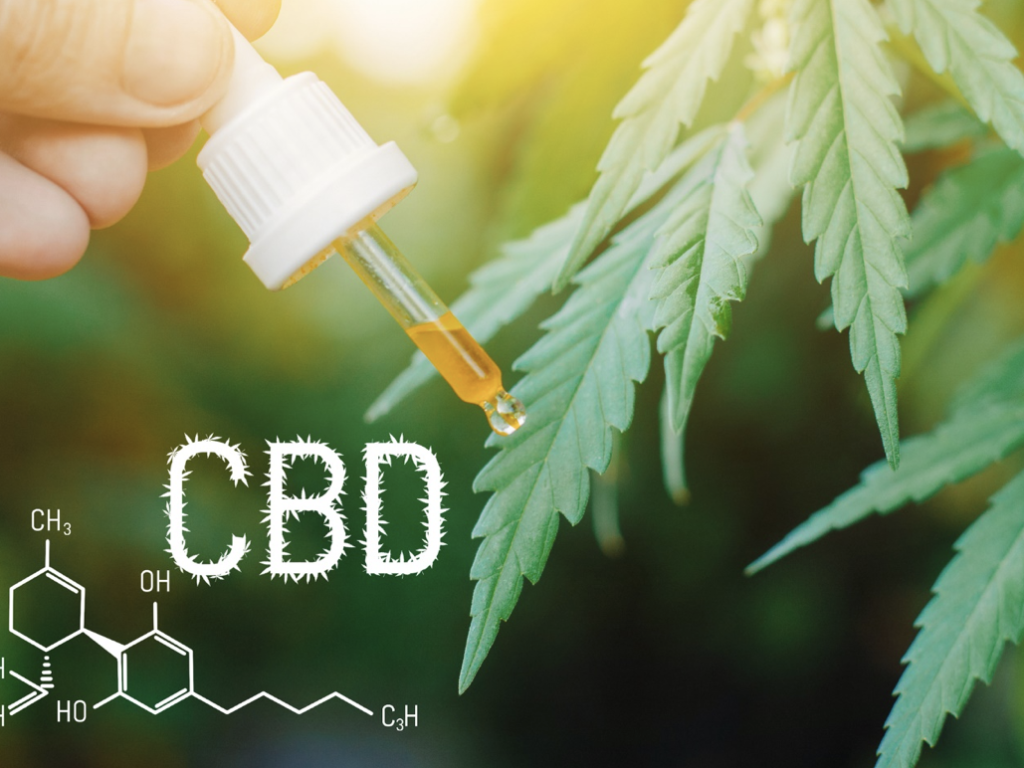 What the CBD Oil For Pets Can Do